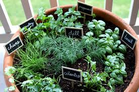 The Herb Garden2